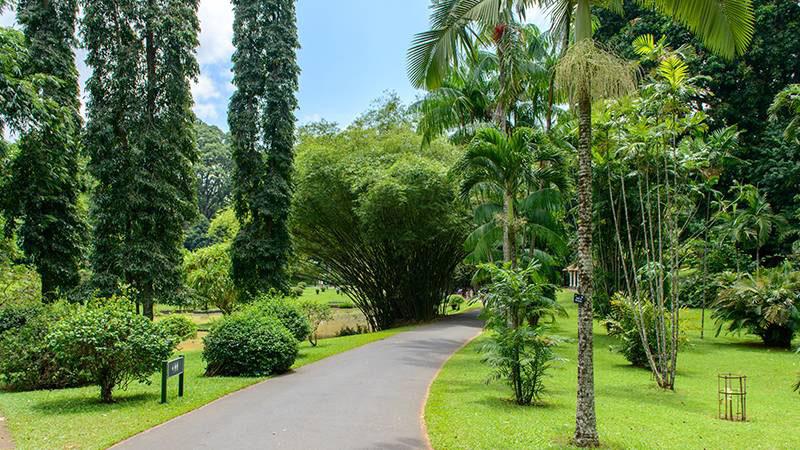 peradeniya botanical garden